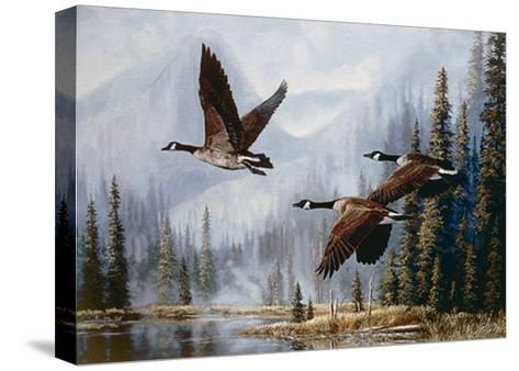Misty Morning Flight-Andrew Kiss-Stretched Canvas Print