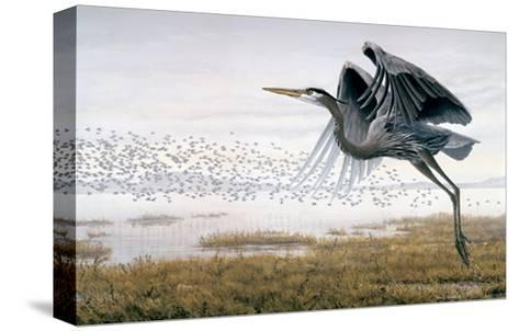 Heron & Sandpipers-Don Li-Leger-Stretched Canvas Print