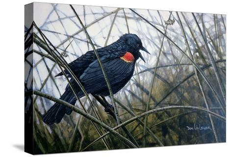 Red Winged Black Bird-Don Li-Leger-Stretched Canvas Print