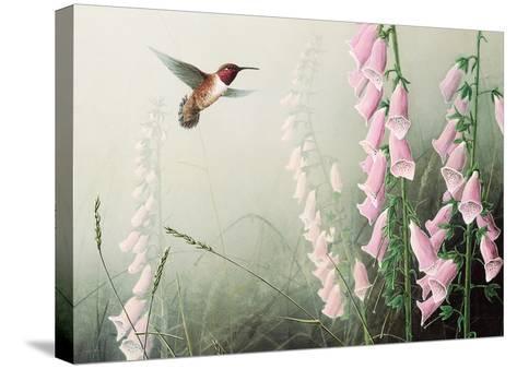 Rufous Hummbrd/Fxglve-Don Li-Leger-Stretched Canvas Print