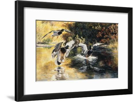 Golden Pond Mallards-Andrew Kiss-Framed Art Print