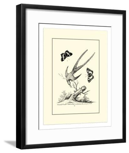 Longtailed Hummingbird , c.1742-George Edwards-Framed Art Print