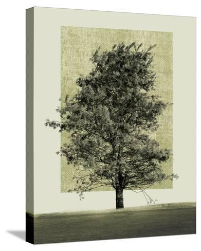 Natures Shapes II-Harold Silverman-Stretched Canvas Print
