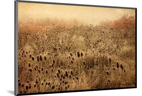 Teasel & Rosehips II-David Winston-Mounted Giclee Print
