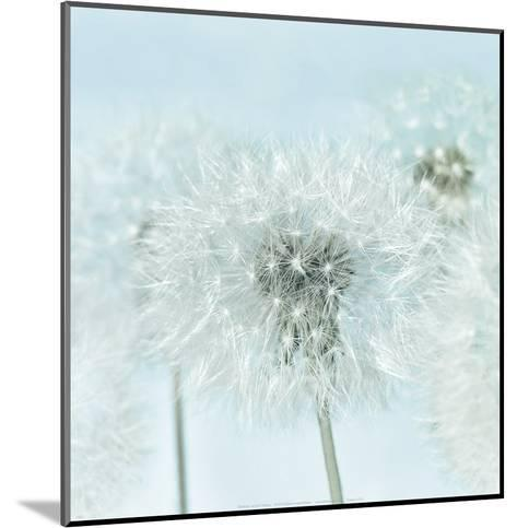 Dandelion I-Kevin Twomey-Mounted Art Print