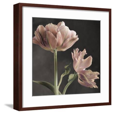 Tulip II-Sondra Wampler-Framed Art Print
