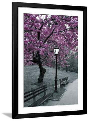 Central Park-Blossom--Framed Art Print