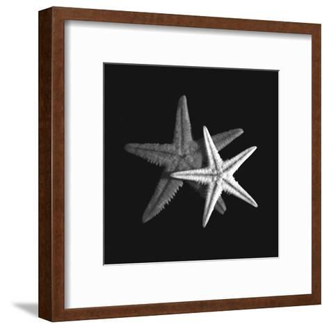 Shell Collection II-Ily Szilagyi-Framed Art Print
