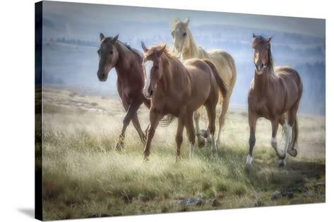 Morning Stroll-Wendy Caro-Stretched Canvas Print