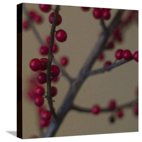 Red Berries II-June Hunter-Stretched Canvas Print
