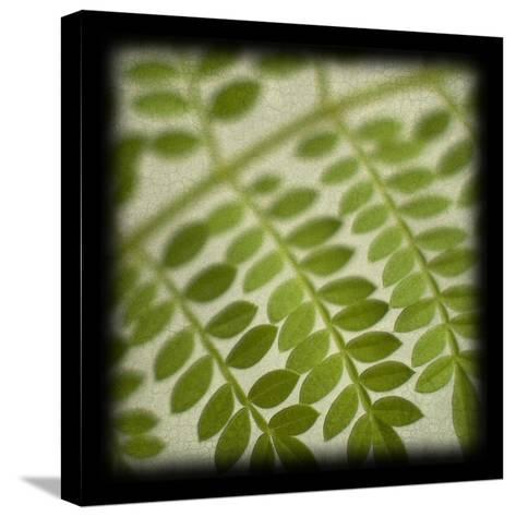 Leafy Fern-June Hunter-Stretched Canvas Print