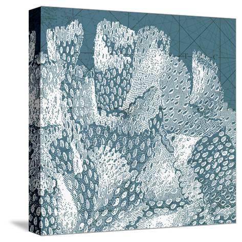 Coastal Menagerie III--Stretched Canvas Print