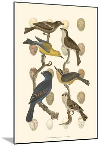 British Birds and Eggs IV--Mounted Art Print
