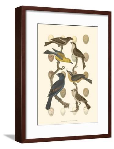 British Birds and Eggs IV--Framed Art Print