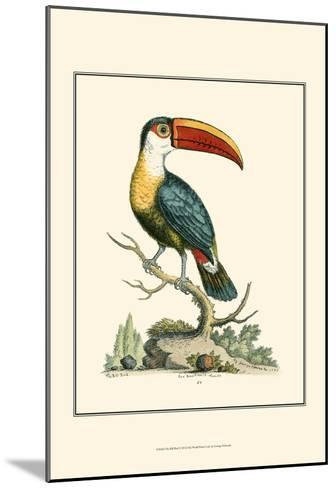 The Bill Bird-George Edwards-Mounted Art Print