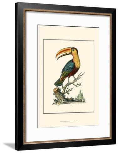 The Toco Toucan-George Edwards-Framed Art Print