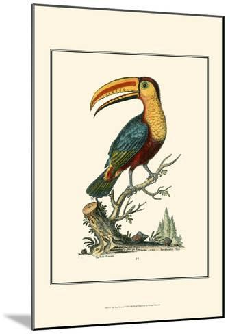 The Toco Toucan-George Edwards-Mounted Art Print