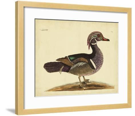 Catesby Summer Duck, Pl. T97-Mark Catesby-Framed Art Print