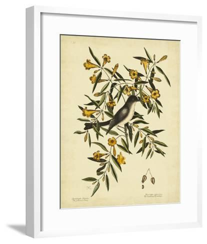 Cates. Black-capt Flycatch. Pl. T53-Mark Catesby-Framed Art Print