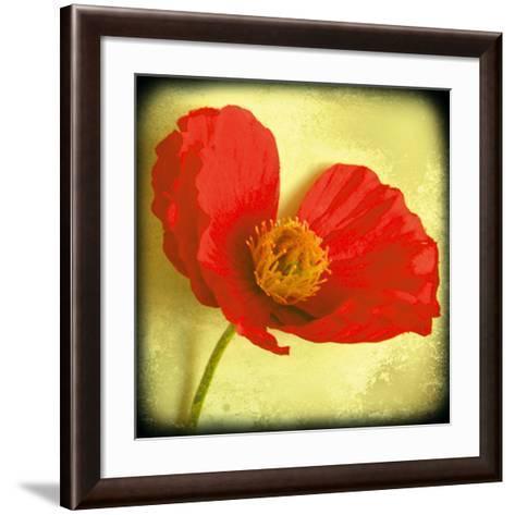 Fresh Poppies I-Rossana Novella-Framed Art Print
