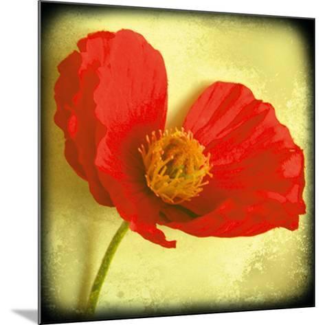 Fresh Poppies I-Rossana Novella-Mounted Giclee Print