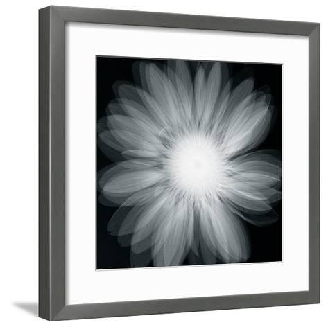 Gerbera Glow-Hugh Turvey-Framed Art Print