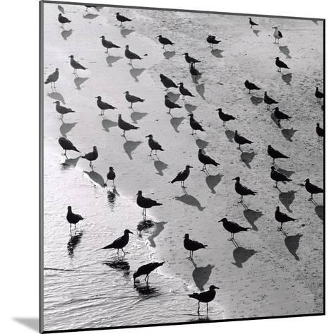 Escher's Seagulls-Michael Kahn-Mounted Giclee Print