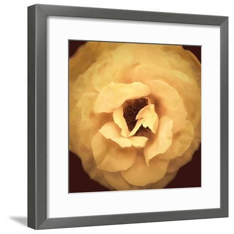 Amber Rose-Katja Marzahn-Framed Art Print