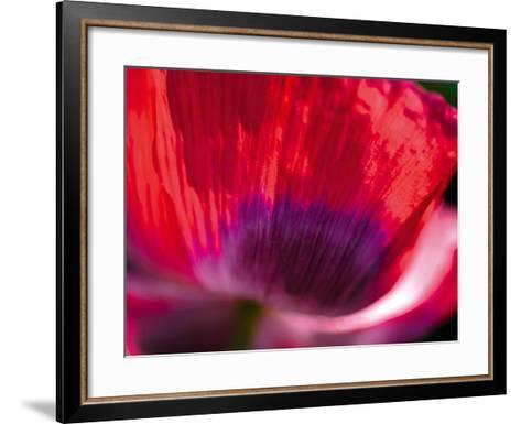 Radiant Poppy III-Ella Lancaster-Framed Art Print