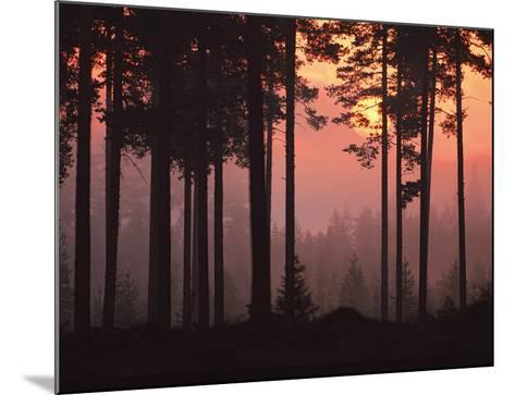 Forest Twilight-Peter Lilja-Mounted Giclee Print