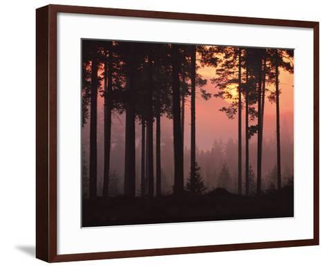 Forest Twilight-Peter Lilja-Framed Art Print