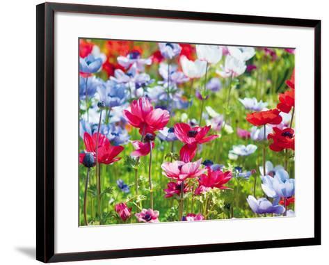 Summer Blush-Ella Lancaster-Framed Art Print