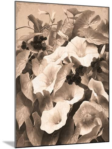 Convolvulus and Blackberries (Sepia)-Mary Dipnall-Mounted Giclee Print