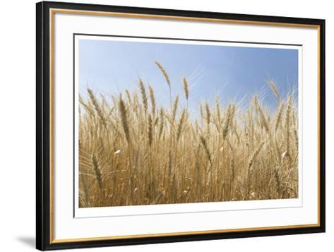 Golden Wheat-Donald Paulson-Framed Art Print
