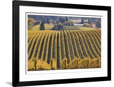 Oregon Vineyard-Donald Paulson-Framed Art Print