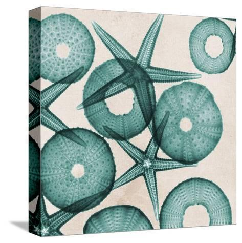 Under The Sea 3-Albert Koetsier-Stretched Canvas Print