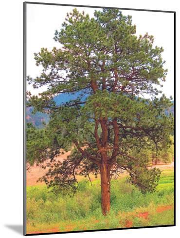 Lone Tree-Joseph Charity-Mounted Art Print