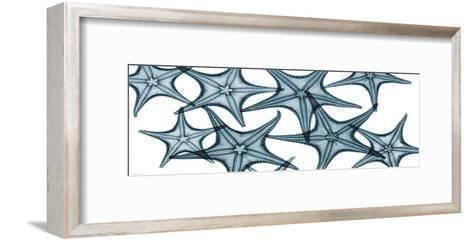 Starfishes-Albert Koetsier-Framed Art Print