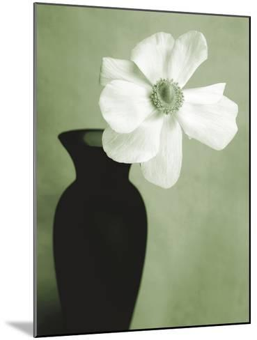 Single Anemone-Steven N^ Meyers-Mounted Giclee Print