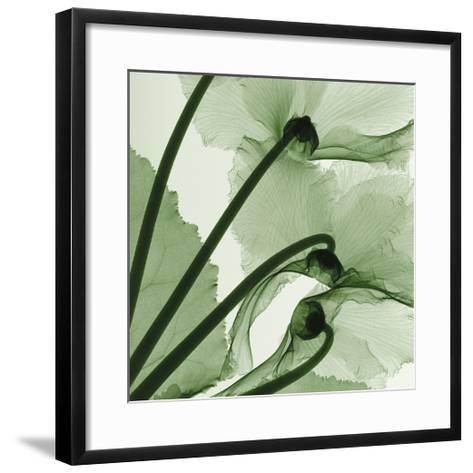 Cyclamen-Steven N^ Meyers-Framed Art Print