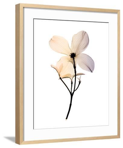 Dogwood 2-Steven N^ Meyers-Framed Art Print
