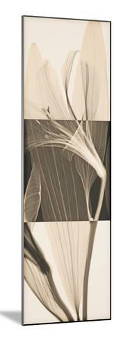 Peruvian Lily II-Steven N^ Meyers-Mounted Giclee Print