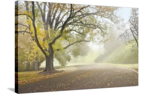 Early Morning Fog-Donald Satterlee-Stretched Canvas Print