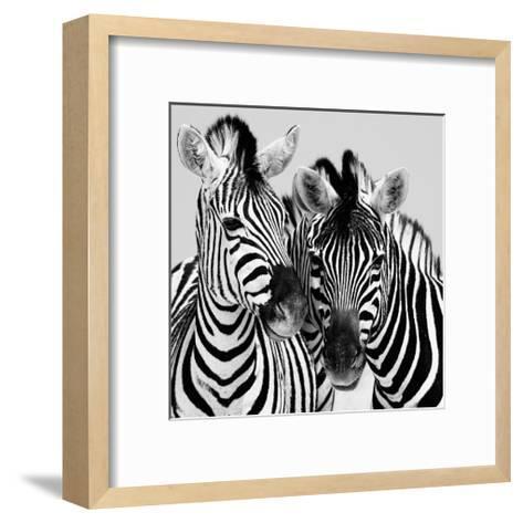 Namibia Zebras-Nina Papiorek-Framed Art Print