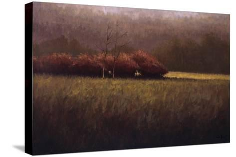 Young Maples-Simon Winegar-Stretched Canvas Print