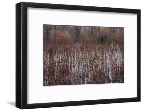 Teasel and Rosehips III-David Winston-Framed Art Print