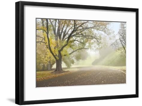 Early Morning Fog-Donald Satterlee-Framed Art Print