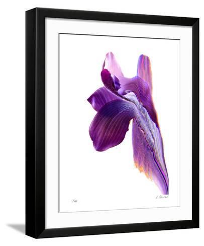 Flowing Orchid-Kate Blacklock-Framed Art Print