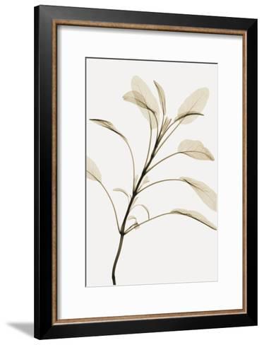 Sage-Steven N^ Meyers-Framed Art Print