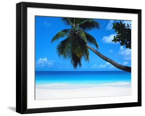 Beach and Palm, Seychelles Island--Framed Art Print